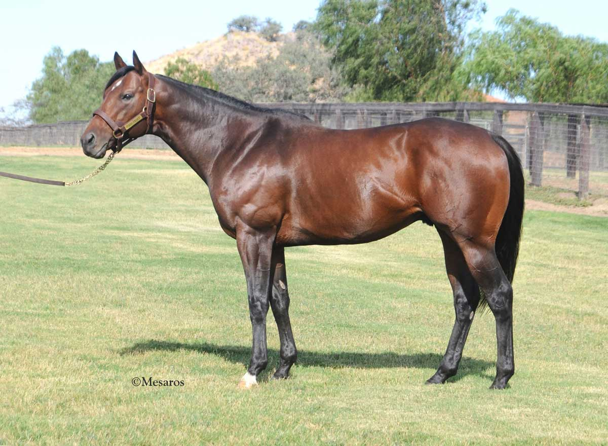 Victory Rose Thoroughbreds Vacaville Ca